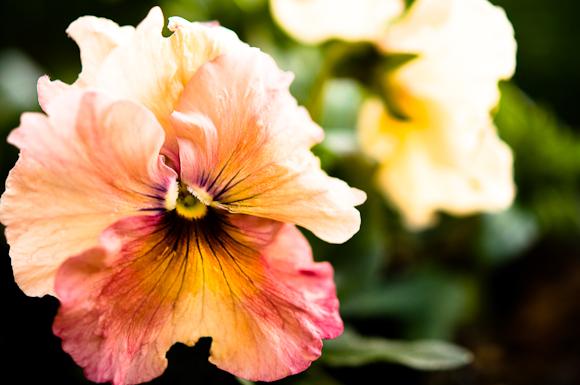 2010-02-18 Garden_8