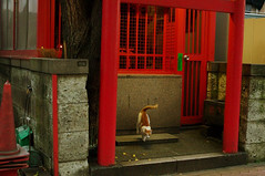 Touch Down (H2@Japan) Tags: street japan cat tokyo nikon kitty 日本 東京 猫 straycat d300 野良猫