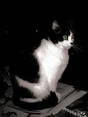 Gato estatua (sordojr) Tags: espaa pet naturaleza cats baby pets macro art beautiful animal cat canon is spain power arte shot natural natura gatos powershot mascot badajoz gato gata animales nena paranoia mascota gatas extremadura sx100 pacense sx100is sordojr paranoiart paranoiadelarte paranoiarte