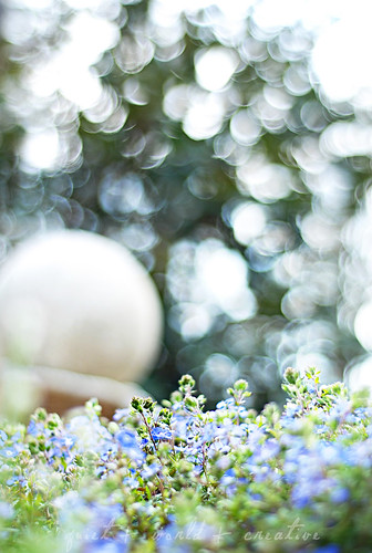 first day of spring: can i marry this bokeh?