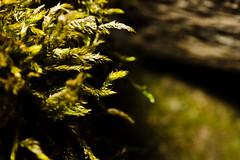 moos (staflo) Tags: plant detail macro green closeup bokeh sony flash af 700 makro moos a700 tamronaflens90mmf28