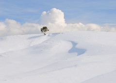 Lone Tree, Yellowstone National Park (AnitaErdmann) Tags: winter snow tree nikon yellowstone 2010 d300 anitaerdmann photocontesttnc11