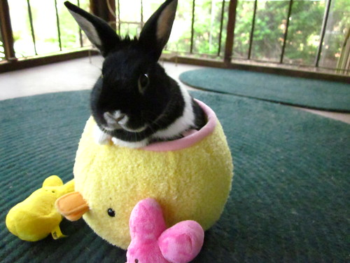 Oreo our Easter bunny!