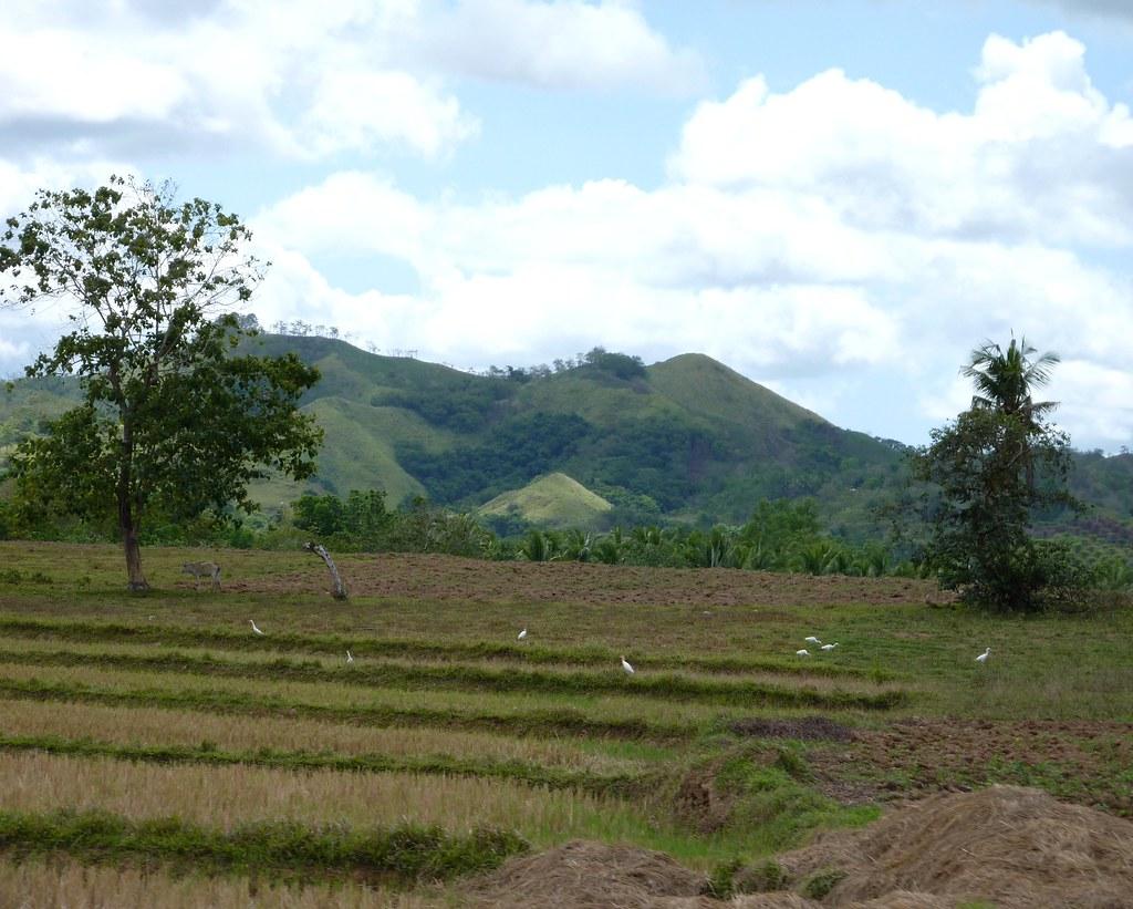 Bohol-Talibon-Chocolate Hills (92)