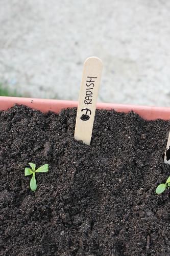container garden radish label