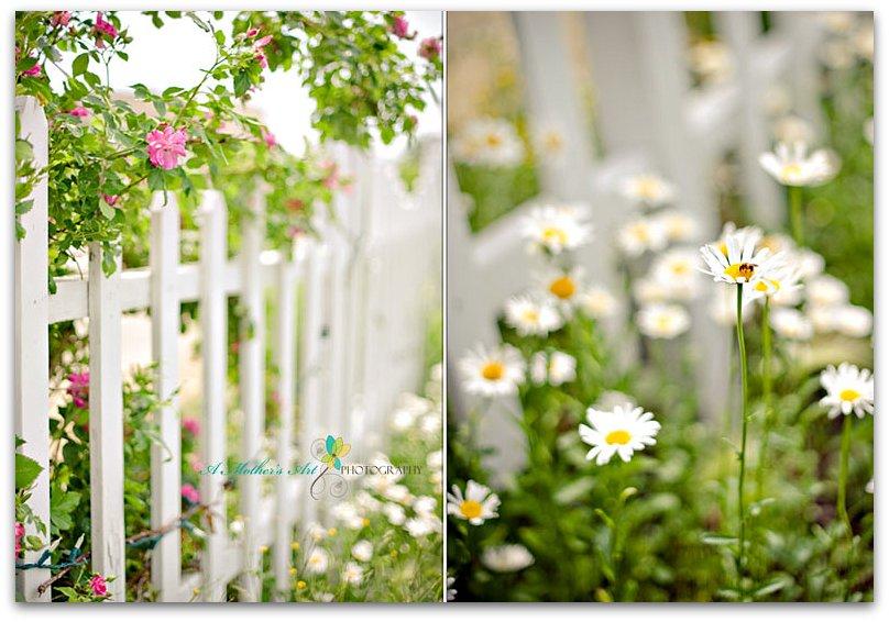 24/52 - Summer garden