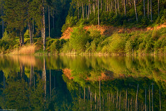 Mirror reflection (Kostas Petrakis) Tags: trees lake reflection green season landscape photography landscapes hellas greece moisture kostas waterscapes peloponissos petrakis doksa
