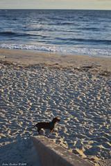 (Erika Revetria) Tags: dog beach agua playa arena perro montevideo playaramrez