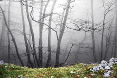 (Mimadeo) Tags: morning trees light mist nature wet leaves misty fog mystery forest dark landscape leaf scary haze branch gloomy darkness natural ominous magic foggy creepy foliage fairy fantasy bark ethereal mysterious horror trunk mystical nightmare unreal hazy magical twisted murky tenebrous