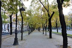 Madrid_0108 (Joanbrebo) Tags: paseodelacastellana lacastellana madrid streetscenes street calles carrers spain españa canoneos80d eosd autofocus efs1018mmf4556isstm arbre arbol tree
