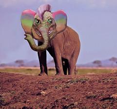Elephant Trendious wild
