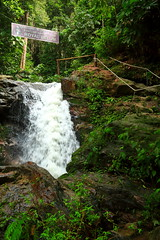 Royal Belum Rainforest (Phalinn Ooi) Tags: belumrainforestresort royalbelum gerik perak malaysia asia malaysian rainforest jungle hutan hujan tropika belum nature outdoor scenery sungai waterfall river airterjun alam semulajadi flora fauna people rafflesia orangasli jahai tribe hotel resort family son wife pretty beautiful landscape sexy state park love canon eos dslr camera photography 5dm4 50mm 85mm 815mm 2470mm night star tripod hike trekking deuter trump melania lake tasik temenggor visitperak2017
