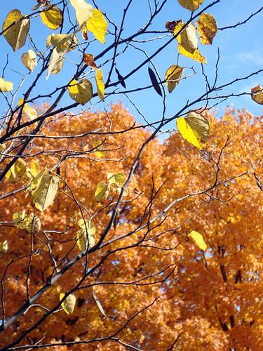 10-24-leaves-falling