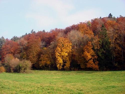Herbstfarben Wunderklingen 1.11.09