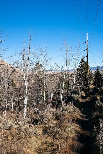 Snow King Trail