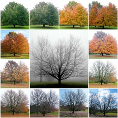 Autumn in one Month (Stanley Zimny) Tags: park autumn trees tree fall nature colors leaves collage automne catchycolors garden botanical leaf colorful colours seasons natural mosaic fallcolors nj autumncolors fourseasons 13 month autumnal colorexplosion 4seasons skylands