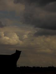 Oh, cielos! La grgola :)))) (vega*) Tags: madrid sky pet clouds cat gato nubes cielos vega mascota