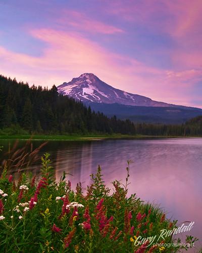 flowers sunset lake trillium mthood wildflowers mounthood trilliumlake garyrandall dsc829622