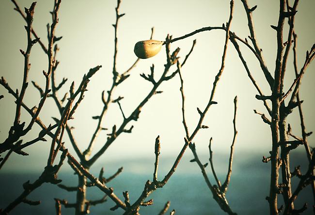 ensamt päron vid havet