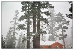 Waking up in a Winter Wonderland (i ea sars) Tags: california morning schnee trees winter usa naturaleza house snow home nature weather forest canon landscape snowflakes scenery seasons hiver nieve natur snowstorm mammoth 5d canon5d invierno snowing mammothlakes hwy395 zima priroda canonef2470mmf28lusm 2470l ef2470mmf28lusm mammothmountain highway395 2470mm    proda canoneos5d snh snih kalifornie