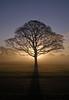 A brand new day (Mr Grimesdale) Tags: shadow mist tree fog olympus morningmist e510 mrgrimsdale stevewallace croxtethpark mrgrimesdale stevewallaceportfolio