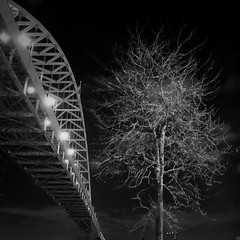 frenetic (split) (thespeak) Tags: bridge bw tree night oregon contrast square portland lens december arch waterfront pdx had wish i405 better 2009 willamette freemont frenetic i