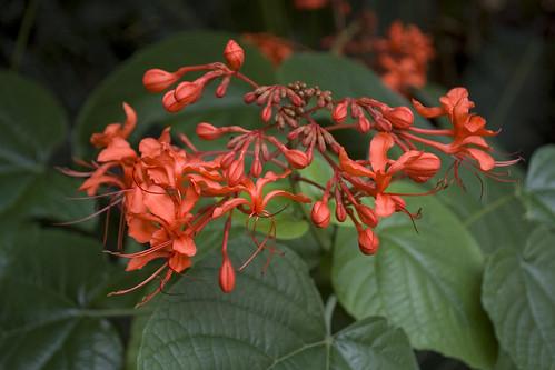 ID Plant