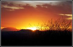 The Rising Sun (Tay-FUN) Tags: sky sunrise bushes gne gndoumu
