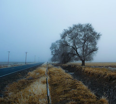 Winter Tree / Empty Ditch
