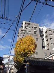 Tokyo 2009 - 中野 - 散步隨手拍(5)