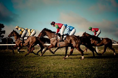 フリー写真素材, 運動・スポーツ, 競馬, 馬・ウマ, イングランド, イギリス,