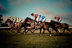 [フリー画像] 運動・スポーツ, 競馬, 馬・ウマ, イングランド, イギリス, 201005080900