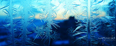 early morning frostwork/kora reggeli jegvirag (mogyorocska) Tags: morning blue ice window early frost curly freeze block curl frostwork