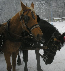 kulig... (evko... not so busy) Tags: winter horses snow cheval zima konie nieg laneige lhiver kulig theunforgettablepictures cheavux