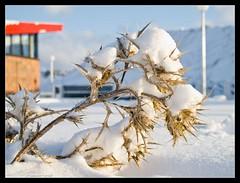 (salvadorfornell) Tags: canon photography photo foto dof nieve fotografo fotografa cruzadas grea noalejo a3b