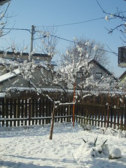 Winter snow in Petrinja Croatia (seanfderry-studenna) Tags: trees winter sky snow cold ice nature fence garden croatia balkans postwar hrvatska balkan petrinja