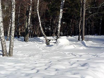 neige dans la forêt.jpg