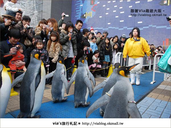 【via關西冬遊記】大阪海遊館~冬季限定!無敵可愛企鵝遊行來囉!25