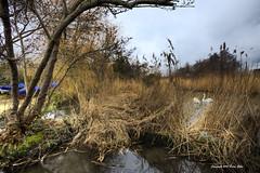 Langstone Mill Pond HDR _MG_0376_7_8HDR (gibbsbrian) Tags: uk sea england coast hampshire coastline southcoast hdr langstoneharbour havant briangibbs imagesforsale handheldhdr langstonemill flickraward february2010 gibbsbrian langstonemillpond southseagalleries copyrightbriangibbs