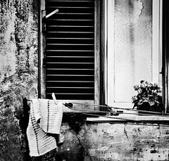 All the stories behind (_Massimo_) Tags: blackandwhite bw italy rome roma window finestra persiana laundry shutter clothesline rag cyclamen biancoenero lazio bucato pannistesi ciclamino garbatella straccio massimostrazzeri ziomamo cordadastendere gettynext