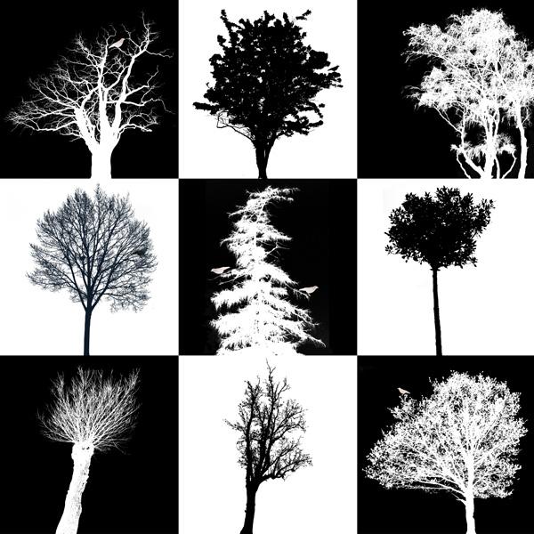 Nio träd