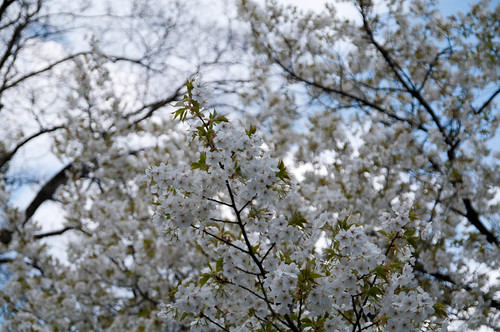 京都御苑に行ってきました