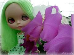Flores no orquidário...
