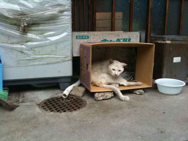 Today's Cat@2011-06-20