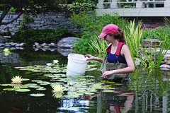 Students on the cutting edge (UWMadisonCALS) Tags: growspring2017 pond waterlillies saigehenkel