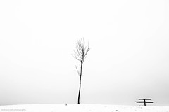 whiteout (bluechameleon) Tags: sharonwish barebranches bluechameleonphotography branches emptiness landscape loneliness minimal picnictable seawall secondbeach snow tree vancouver white winter