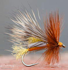 October Humpy (WhiskeyCreek) Tags: flies flyfishing trout dryfly octobercaddis