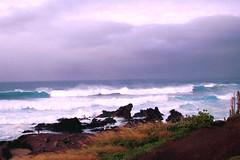 Thanksgiving Big Waves (belindah-Thank You!-450.000 Views Now) Tags: ocean hawaii maui bigwaves