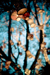 Central Park III - warm lights