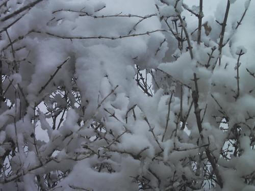 Sticky Snow!